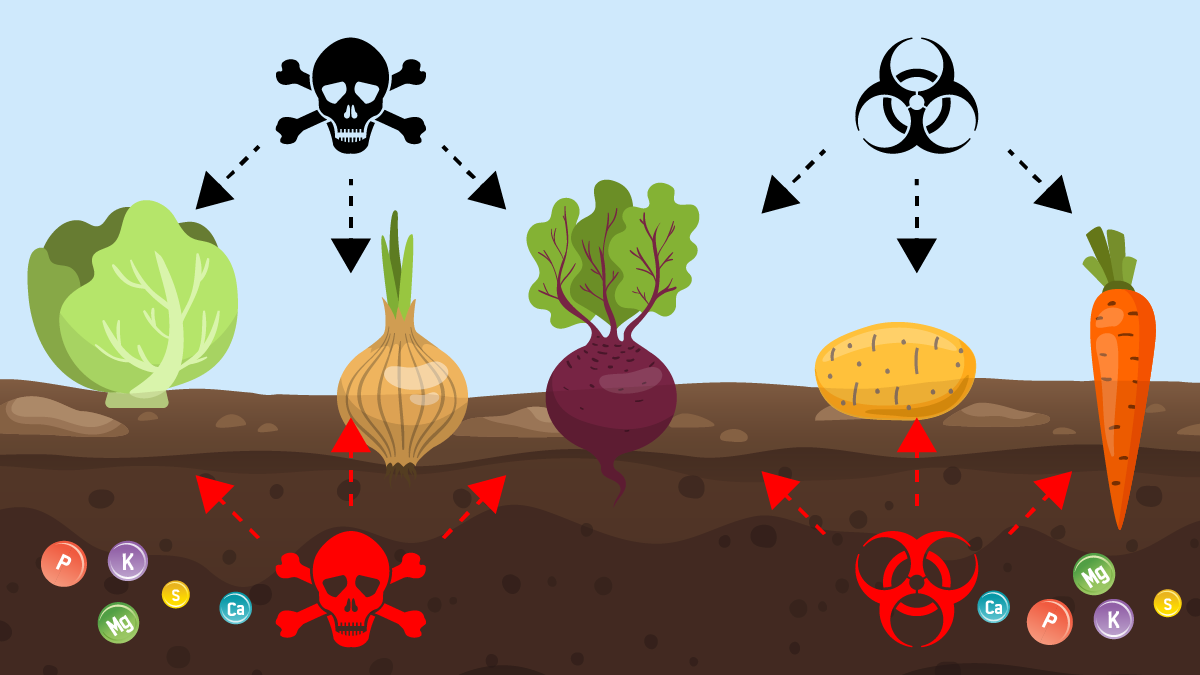Foods are missing nutrients because these aren't in the soil, and they have unwanted pesticides and other residues.