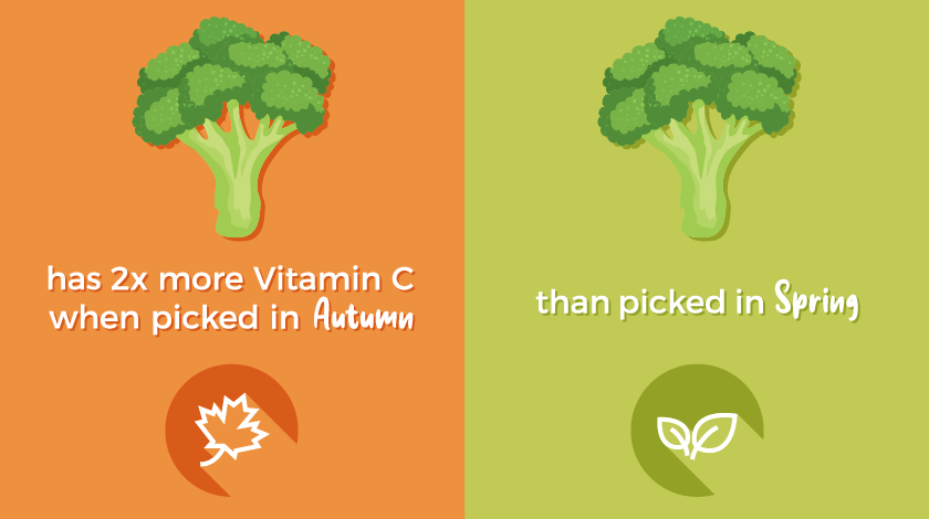 Broccoli in autumn has two times the vitamin C content of broccoli harvest in the spring time.