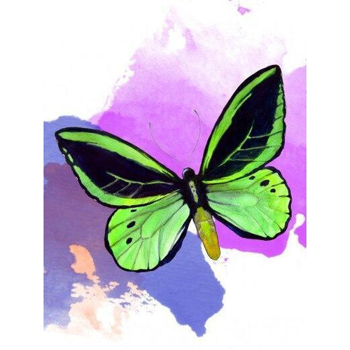Green Butterfly - DIY Oil Painting on Canvas - Paint By Numbers-EasyWhim