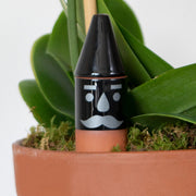Thirsty Gnome™ Self Watering Plant Stake