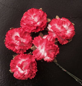 Carnations - 2 Tone Red White