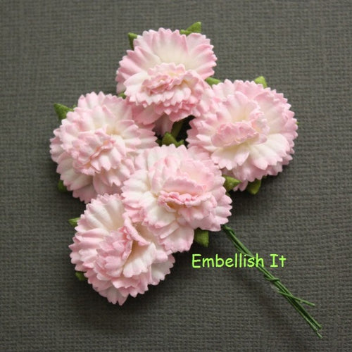 Carnations - 2 Tone Pink