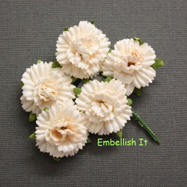 Carnations - Pale Peach