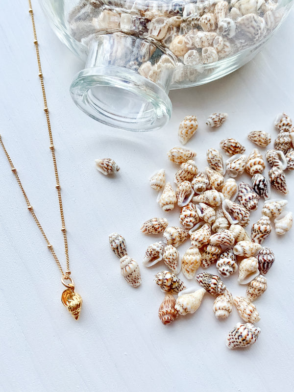 Tiny Bahama Sea Shell Necklace 14k