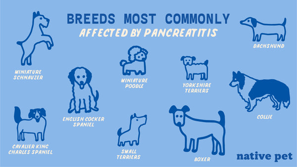 Dog Breeds Affected by Pancreatitis