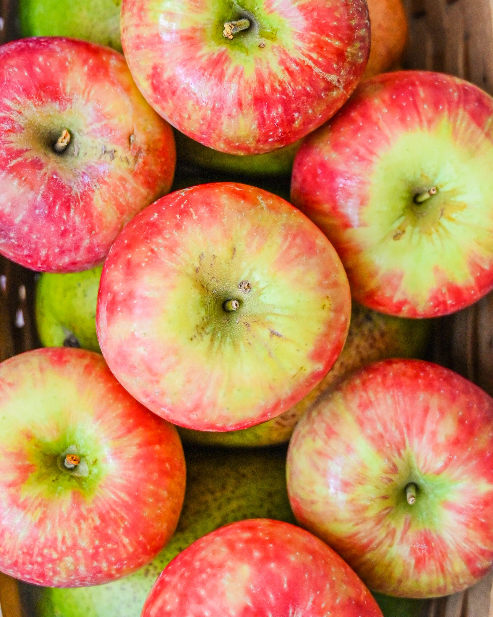 Are apples safe for dogs?