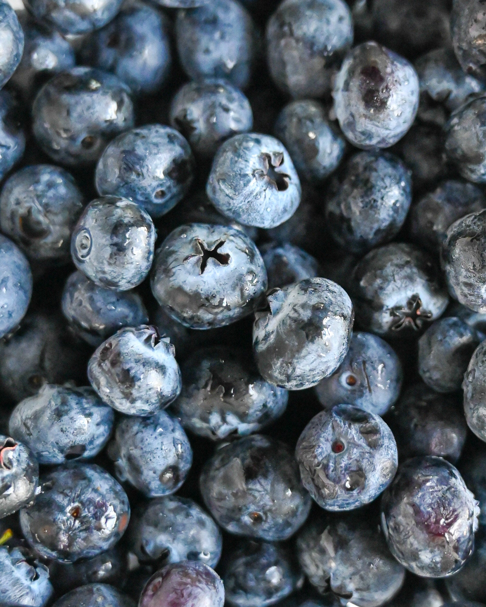 Health benefits of blueberries for dogs