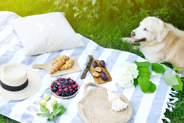 Dog sitting beside a picnic blanket with a pillow, hat, food and flowers on it