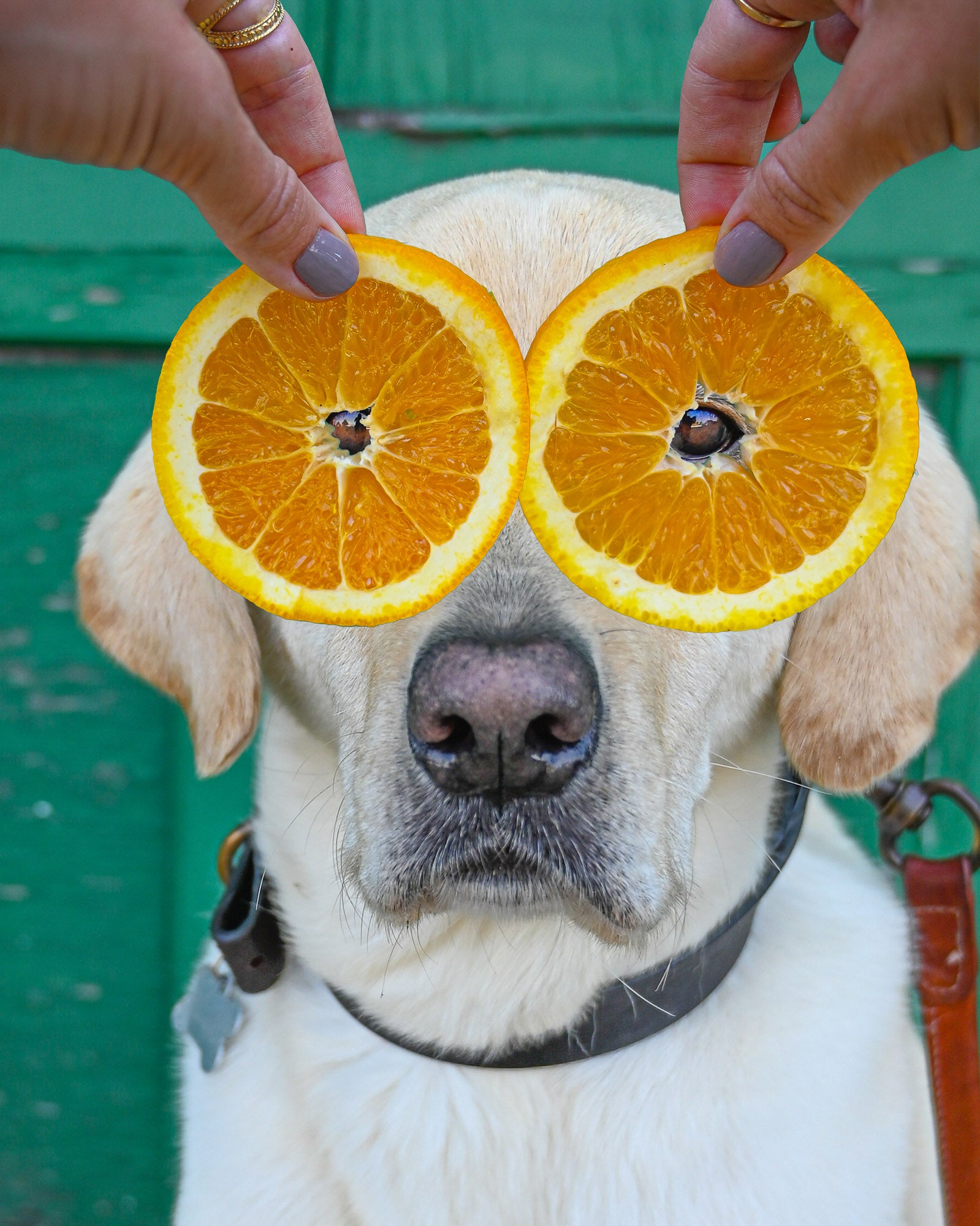 Dog with orange slices