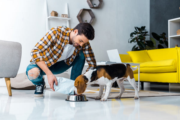 dog allergy testing: Man giving more food to his dog