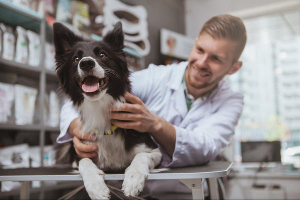 Male doctor holding and examining a dog