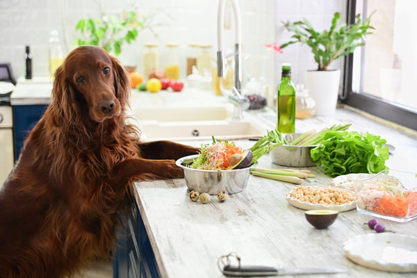 can dogs eat celery: Dog with its paws on the kitchen counter with various foods on top
