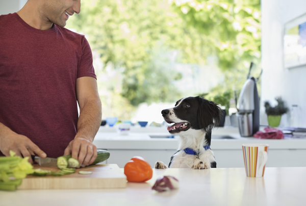 man and his dog in the kitchen