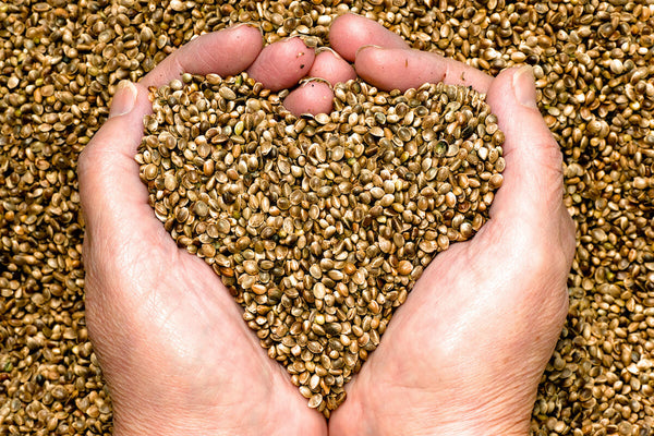 Person using their hands to scoop hemp seeds