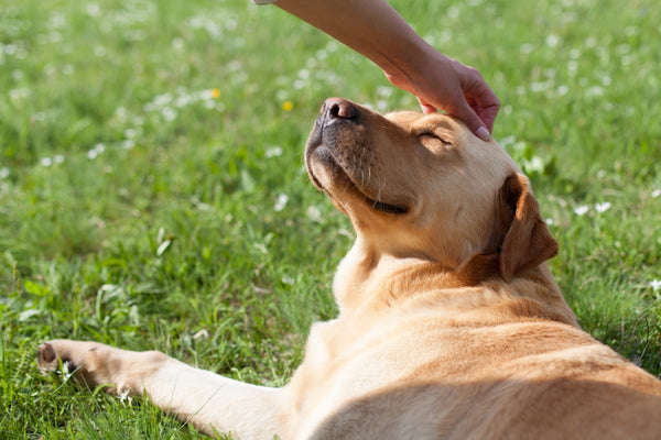 Person petting a dog while in the field
