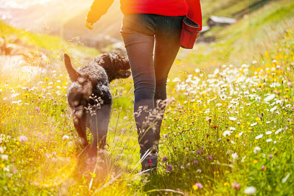 Woman walking with her dog in a field