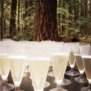 70 Compostable Champagne Flutes-Drinkware-SelfEco-VinGrotto Wine Cellar Construction Company