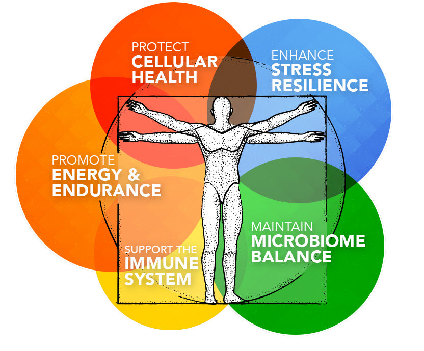 protect cellular health, enhance stress resilience, promote energy + endurance, support the immune system, and maintain microbiome balance