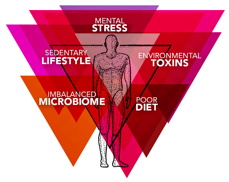 Daily Stress, Environmental Toxins, Poor Diet, Sedentary Lifestyle, Imbalanced Microbiome.