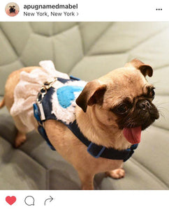 Whitney Love Has Wings Dog Harness Vest