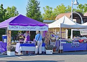 Fashionable purple and white gazebo tent