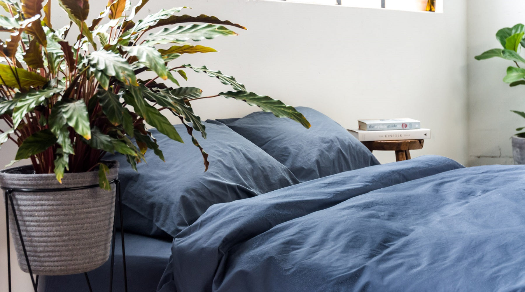 Best Indoor Plants For Bedrooms The Good Sheet