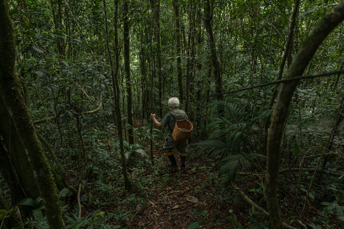 The Atlantic Forest: People vs. Politics