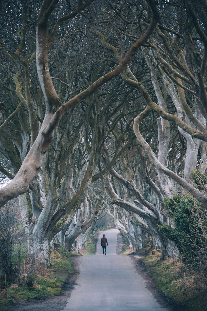 The Dark Hedges, as seen in Game Of Thrones.