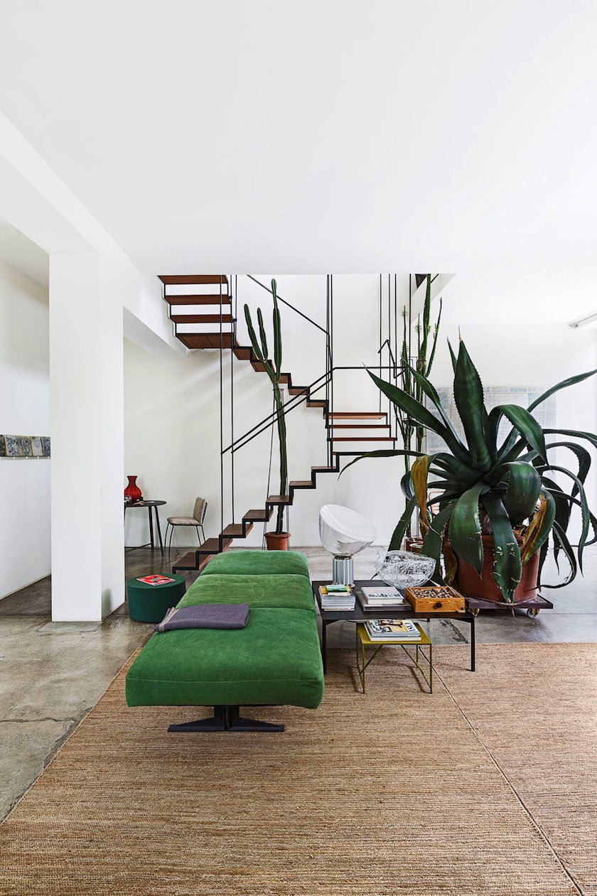 Big agave plant with dark green lancet leaves in a modern living room by a staircase.