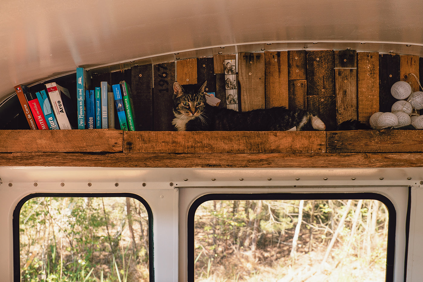 A cat resting in a custom built shelf above a window of the bus. (Photo: Kai Branss)