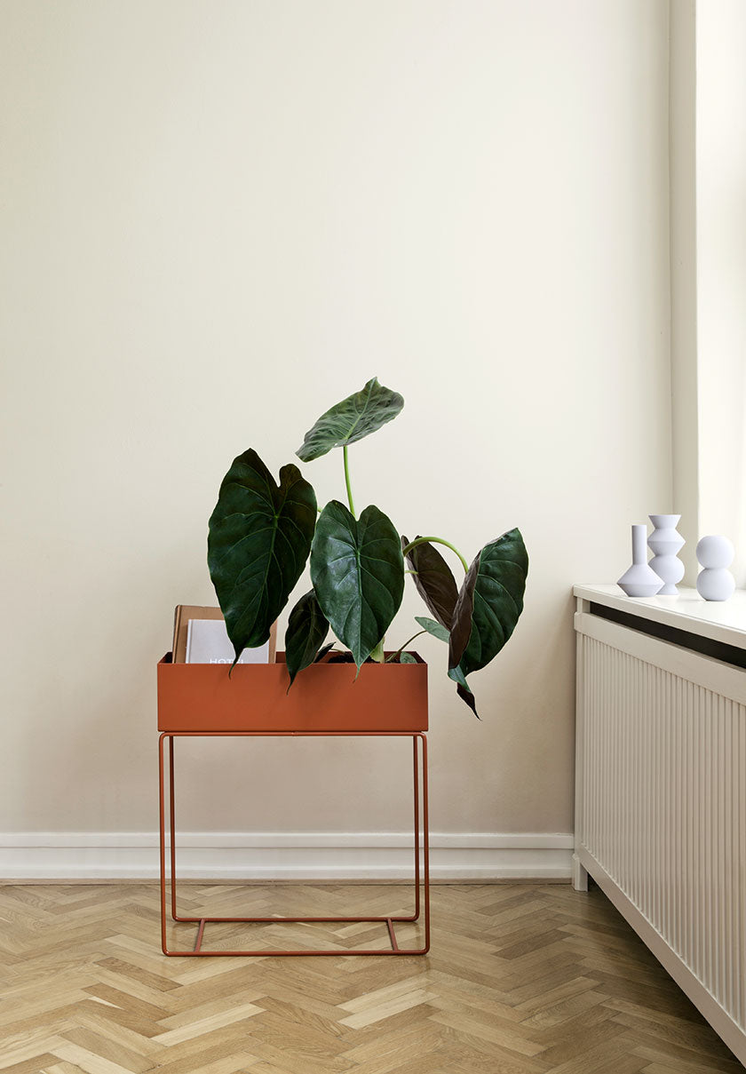 Monstera potted plant with big heart shaped leaves placed on a decorative side stand near a window.