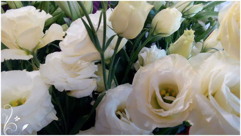 How to distinguish a rose from eustoma