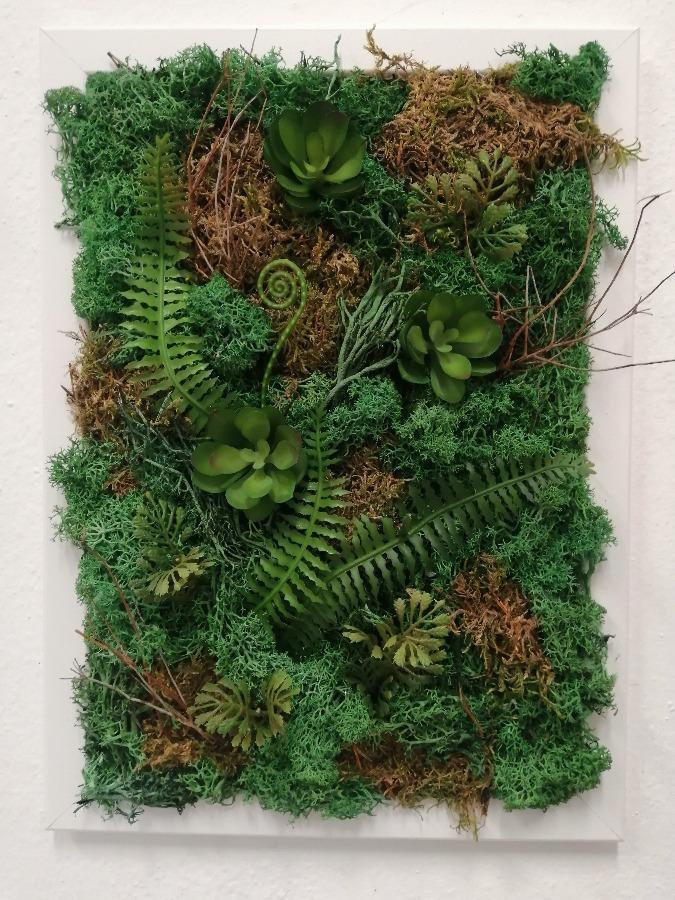 Moss Picture with Succulents