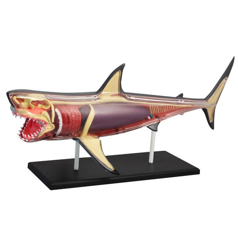 discovery mindblown anatomy shark