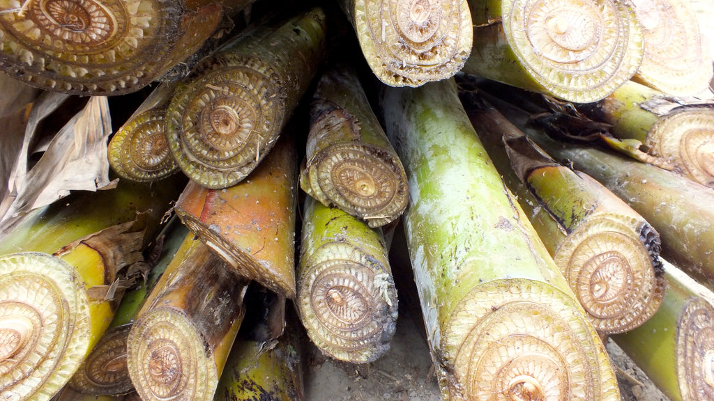 Cut down banana pseudostems with different layers, Nadia District, India
