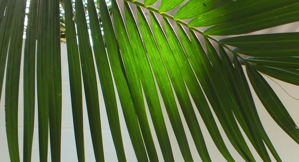 Palm leave in the sunshine