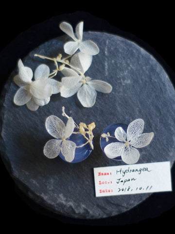 Sustainable Flower Earrings made from Japanese Hydrangea | Nachhaltige Blumenohrringe aus japanischer Hortensie