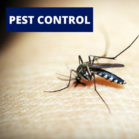 Insect Control - Indoor and Outdoor
