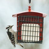 Audubon Double Suet Feeder (Random Colours)