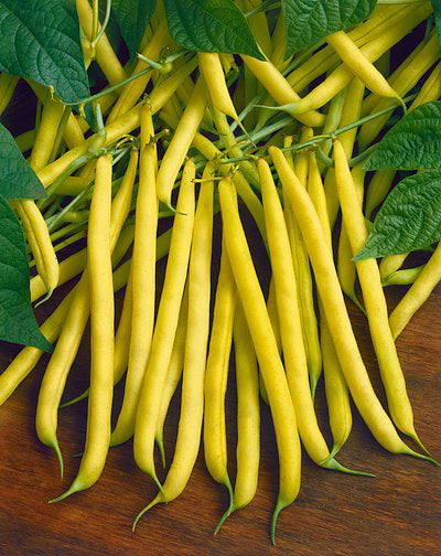 Halifax Seeds Top Notch Golden Wax Bean, 125g