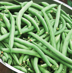 Halifax Seeds Improved Tendergreen Bean, 125g