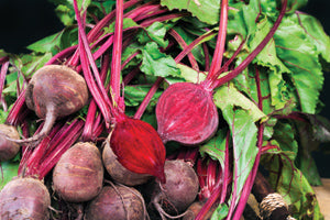 Halifax Seeds Detroit Dark Red Beet, 25g