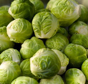 Halifax Seed - Brussels Sprouts - Long Island Improved