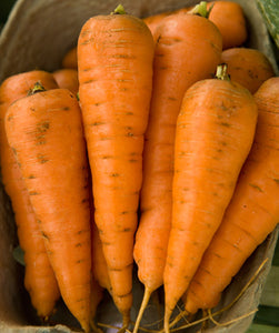 Halifax Seeds Chantenay Carrot, 25g