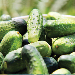 Halifax Seed - Cucumber - Wisconsin Pickling SMR