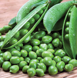 Halifax Seeds Laxton's Progress Pea (Bush), 125g