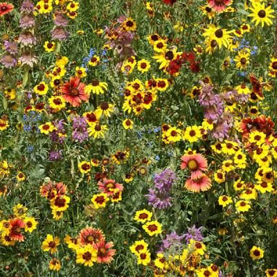 Halifax Seed - Wildflower Mixture