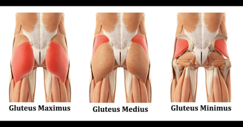 The Glutes - A Booty-Full Muscle