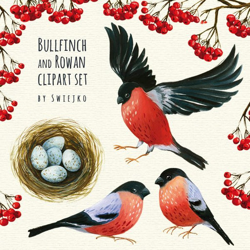 Bullfinch Clipart, Watercolor Illustration, Forest Images, Rowan, Autumn, scrapbooking Clipart Swiejko    Mygrafico