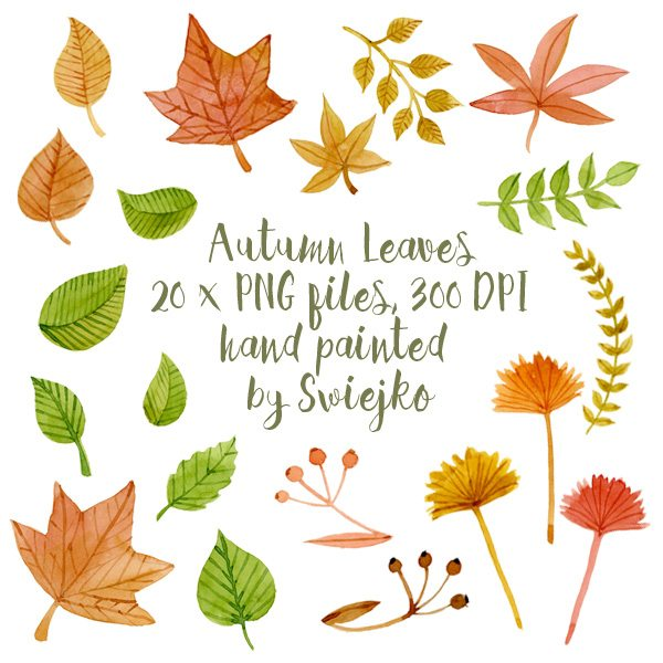 Watercolor Autumn Leaves, hand painted fall set Cliparts Swiejko    Mygrafico
